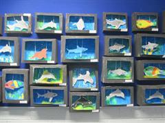 Our Aquariums