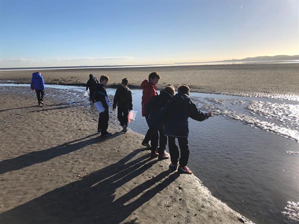 Field Trip to Sandymount