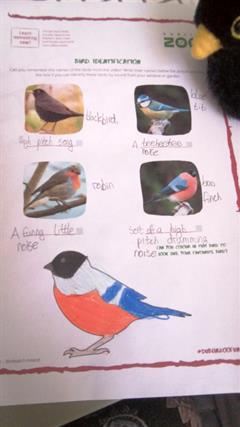 SESE - Garden Bird Watching