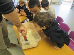 Science Week - Playdough