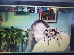 Spider & Reptile Show