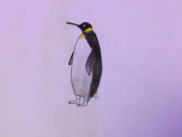 Penguins in the Antarctica